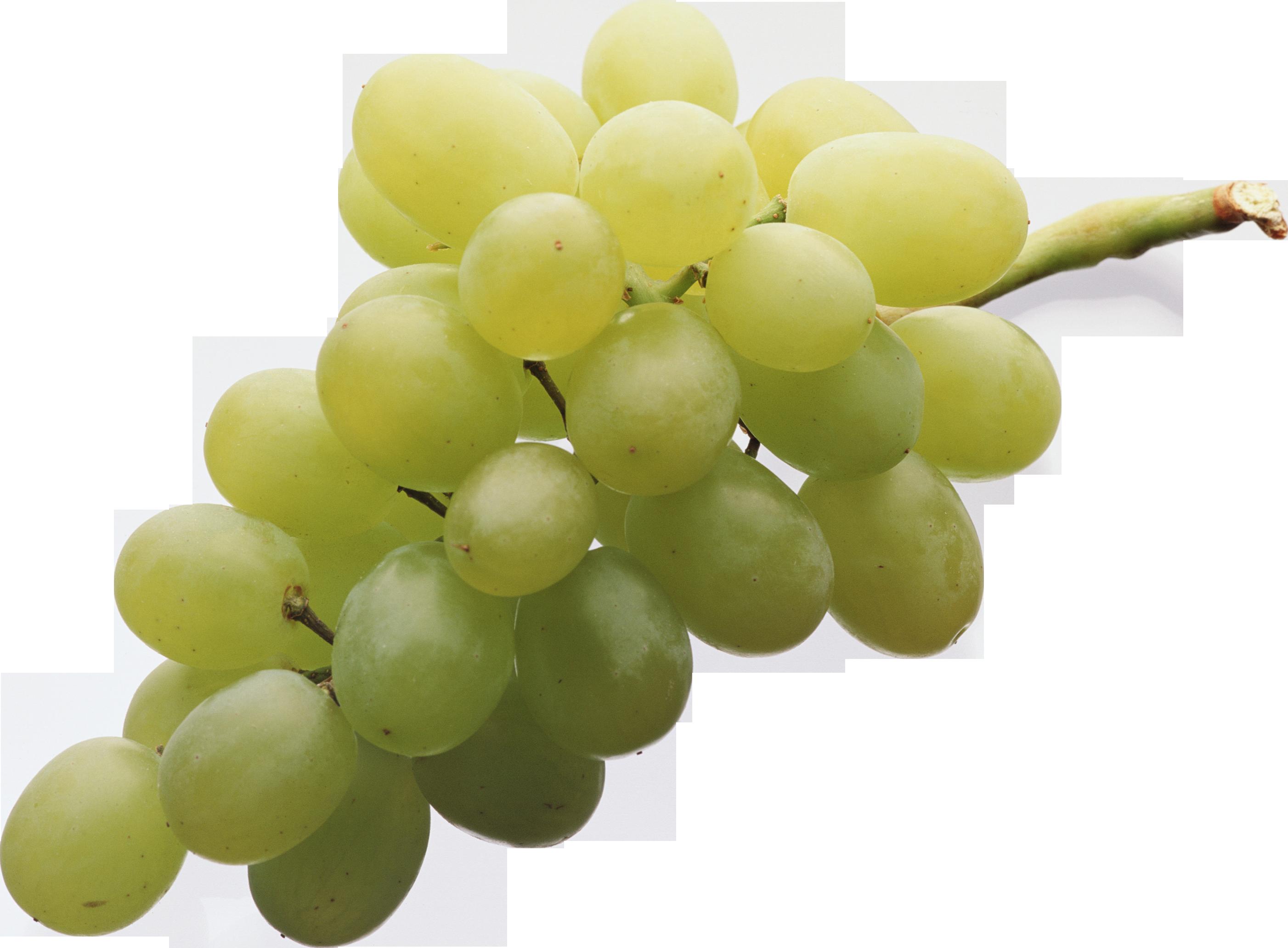 картинки на прозрачном виноград относится грибным, широко