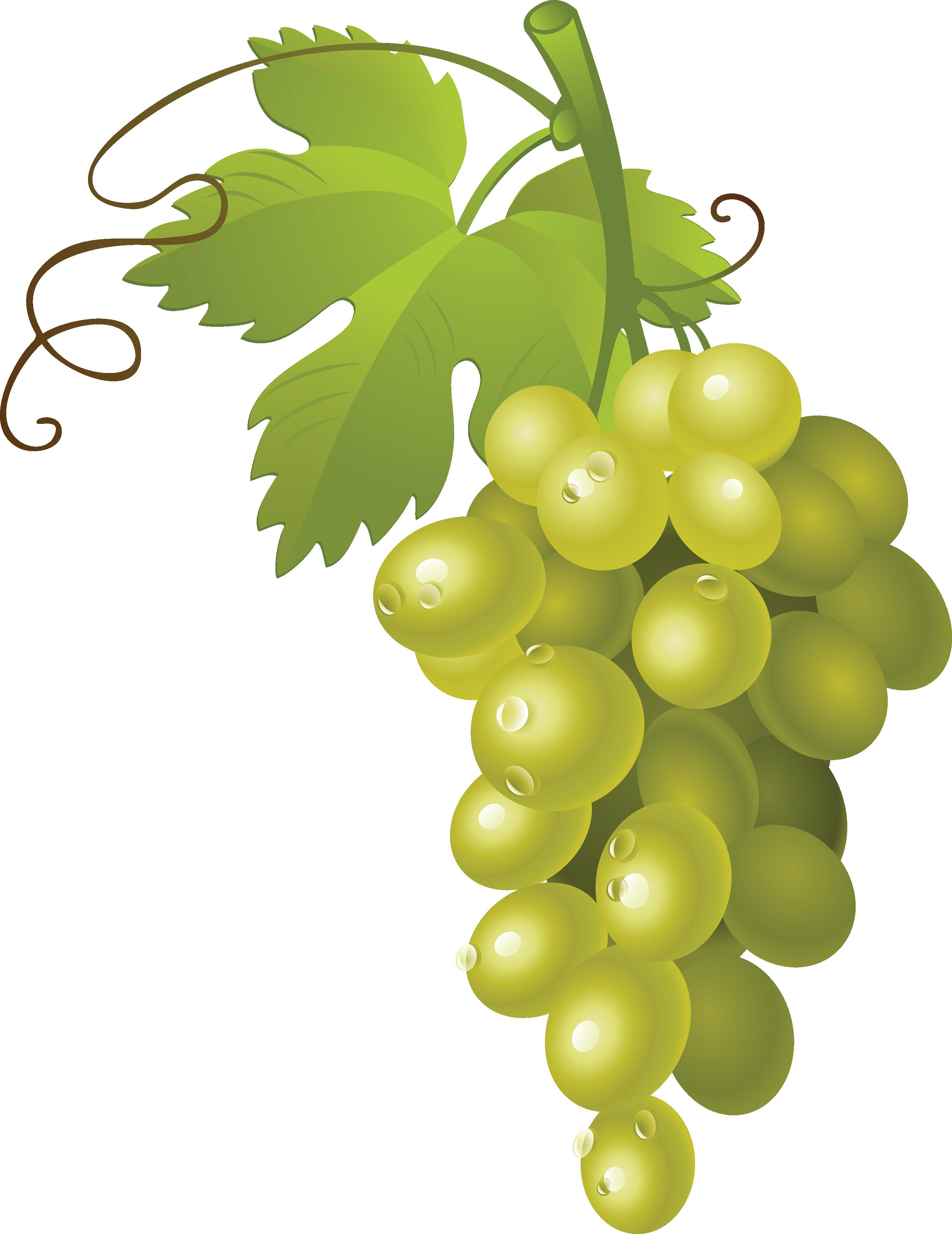 картинки на прозрачном виноград ткань