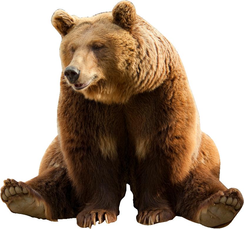 Картинка медведь на прозрачном фоне для детей