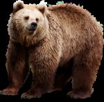Скачать PNG картинку на прозрачном фоне Бурый медведь, вид сбоку