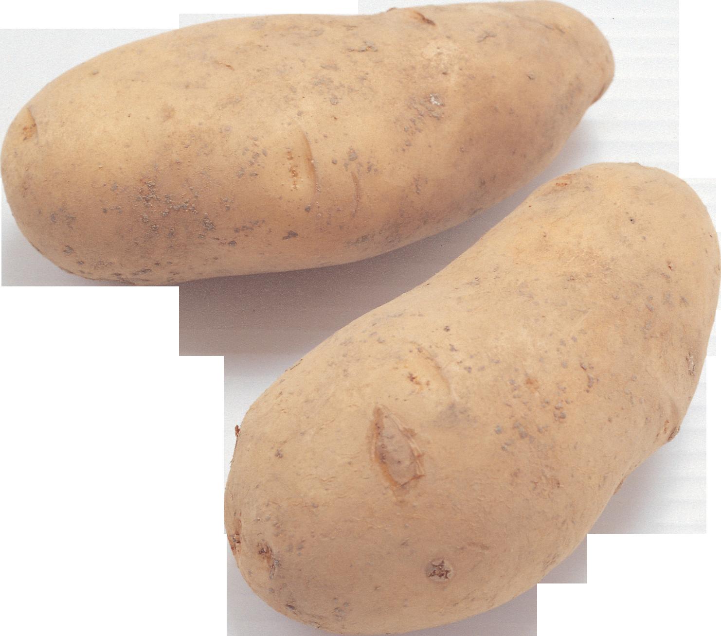 овощи картошка картинки красивые зверьки, тактильный