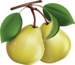 Скачать PNG картинку на прозрачном фоне Две нарисованных зеленых груш, с листьями на ветке