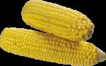 Скачать PNG картинку на прозрачном фоне Две очищенные кукурузы