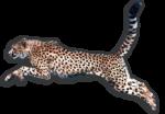 Скачать PNG картинку на прозрачном фоне Гепард прыгает, хвост вверх