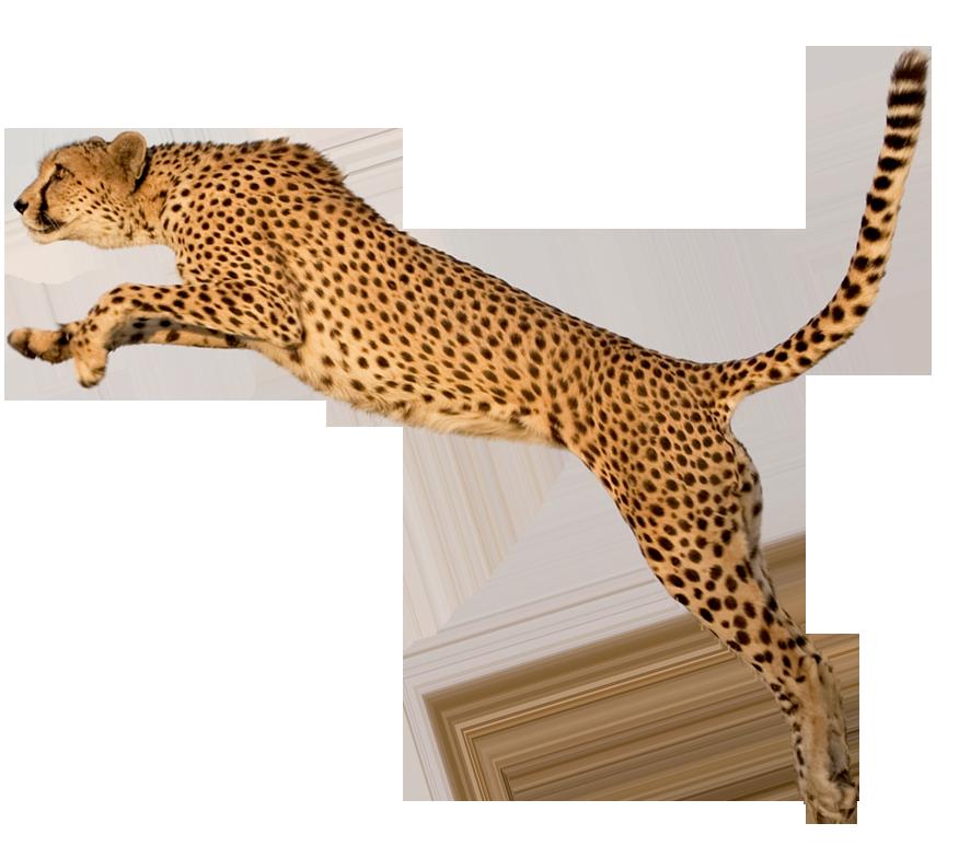 бытовки картинка ягуар на белом фоне как показывается практика