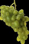 Скачать PNG картинку на прозрачном фоне Кисточка белого винограда