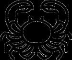 Скачать PNG картинку на прозрачном фоне Контур краба, нарисованный