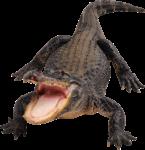 Скачать PNG картинку на прозрачном фоне Крокодил с открытой пастью