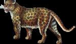 Скачать PNG картинку на прозрачном фоне Леопард нарисованный идет влево и оборачивается