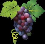 Скачать PNG картинку на прозрачном фоне Листья, гроздь, виноград