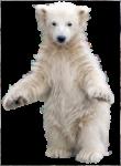 Скачать PNG картинку на прозрачном фоне Маленький белый медвежонок стоит на задних лапах