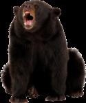 Скачать PNG картинку на прозрачном фоне Медведь рычит