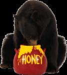 Скачать PNG картинку на прозрачном фоне Медведь сидя ест мед