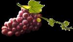 Скачать PNG картинку на прозрачном фоне Нарисованная гроздь красного винограда с листьями и веткой