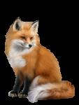 Скачать PNG картинку на прозрачном фоне Нарисованная лиса сидит