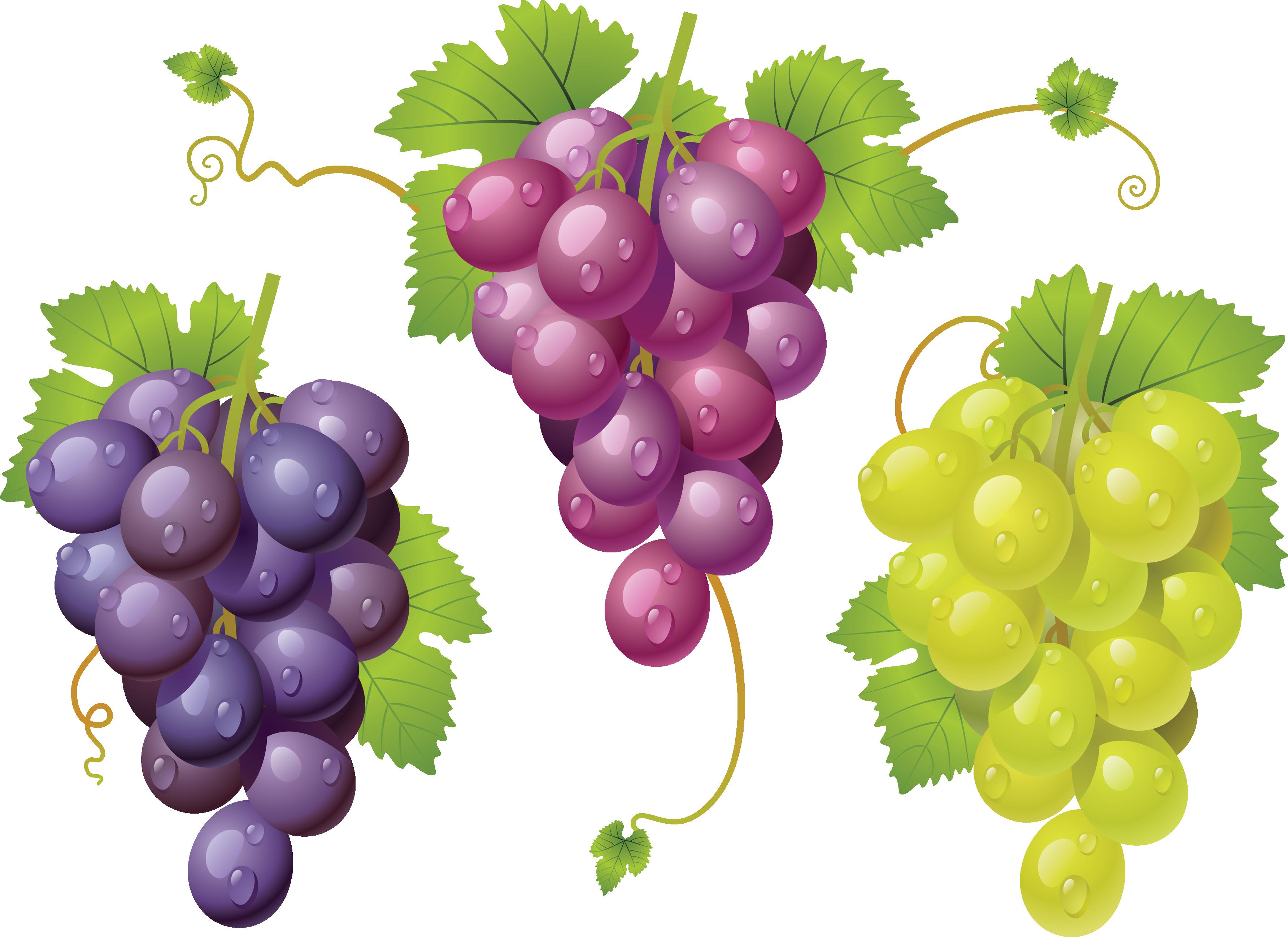 Нарисованные виноградные грозди, синяя, красная и белая