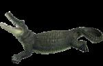 Скачать PNG картинку на прозрачном фоне Нарисованный крокодил, с открытой пастью