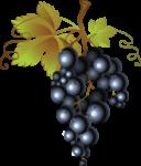 Скачать PNG картинку на прозрачном фоне Нарисованный синий виноград, кисточкой, гроздь