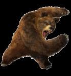 Скачать PNG картинку на прозрачном фоне Очень злой бурый медведь, рычит, графический