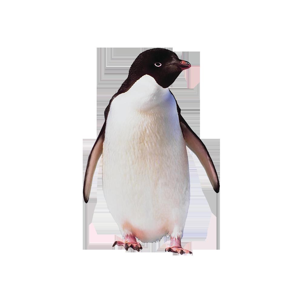 Пингвин картинки для детей на белом фоне
