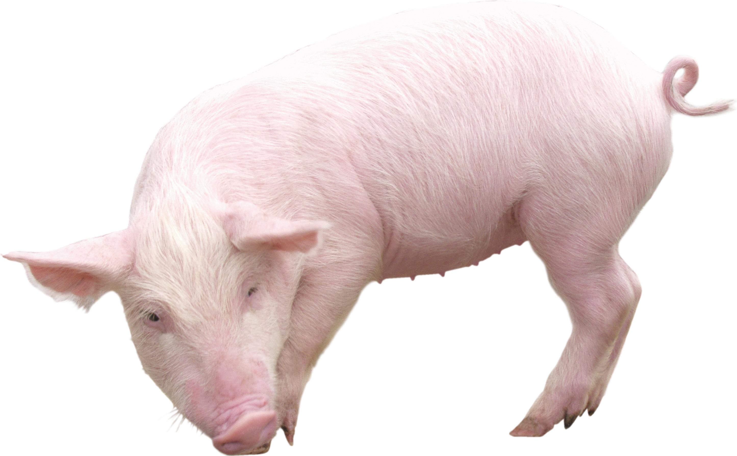Картинка домашние животные на прозрачном фоне