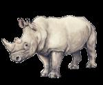 Скачать PNG картинку на прозрачном фоне Рисунок носорога, стоит смотрит