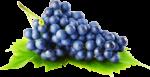 Скачать PNG картинку на прозрачном фоне Синий виноград лежит на листе