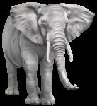Скачать PNG картинку на прозрачном фоне Слон, нарисованный, вид спереди