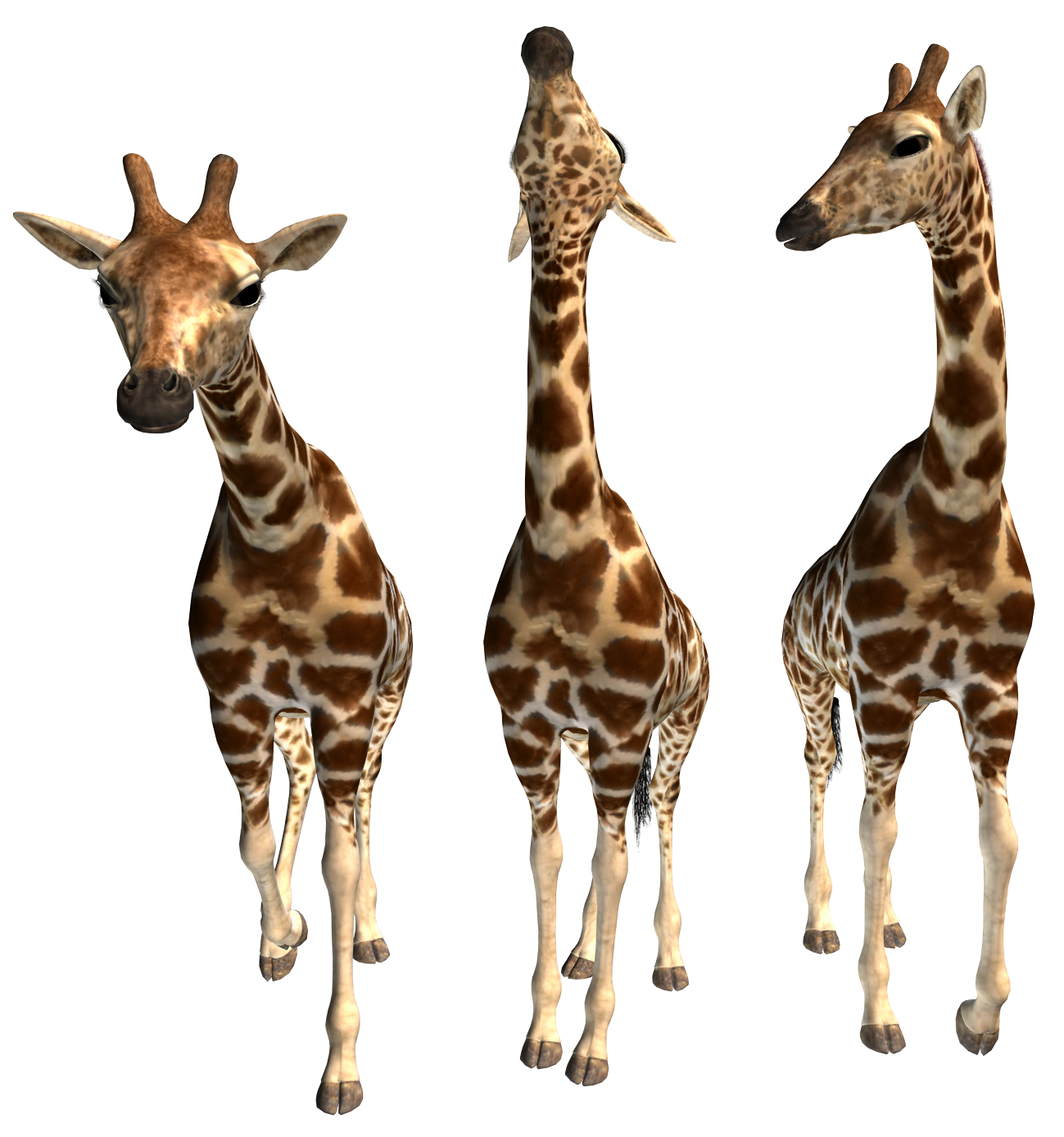 картинка три жирафа продукция индии