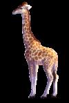 Скачать PNG картинку на прозрачном фоне Жираф нарисованный, смотрит влево