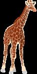 Скачать PNG картинку на прозрачном фоне Жираф нарисованный, стоит