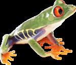 Скачать PNG картинку на прозрачном фоне Зеленая лягушка с соранжевыми глазами и лапками, вид сбоку