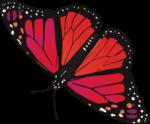 Скачать PNG картинку на прозрачном фоне бабочка розово-красная с черным кантом