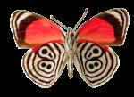 Скачать PNG картинку на прозрачном фоне бабочка, вид сверху, нижние части крыльев в полосках как у зебры
