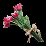 Скачать PNG картинку на прозрачном фоне Букет розовых тюльпанов перевязанных бантом