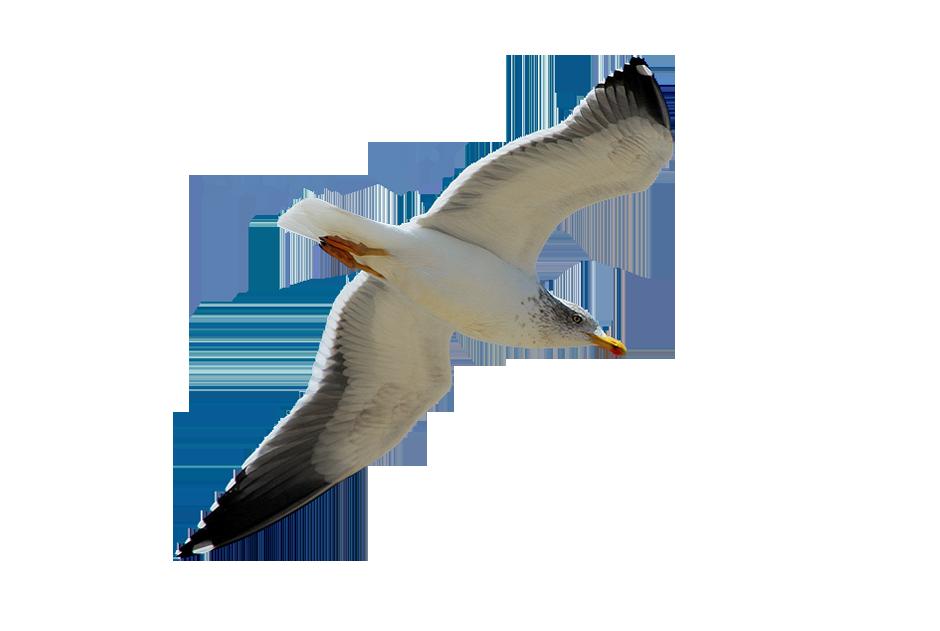 Анимационные картинки чайки