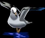 Скачать PNG картинку на прозрачном фоне чайка, нарисованный на воде