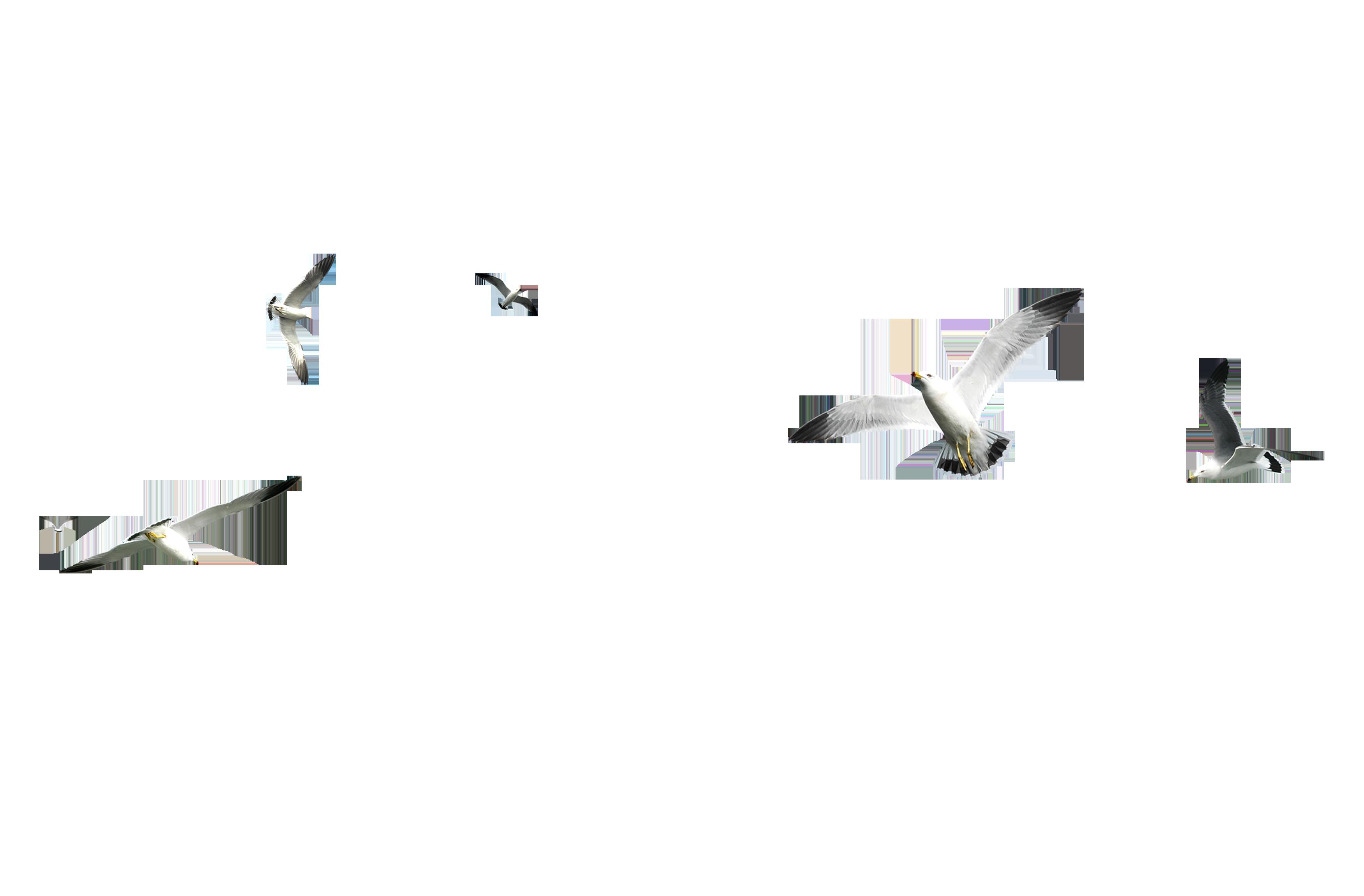 Клипарт анимация на прозрачном фоне чайки летят