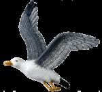 Скачать PNG картинку на прозрачном фоне чайка, рисунок, взлет