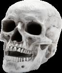 Скачать PNG картинку на прозрачном фоне Человеческий череп