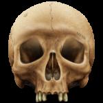 Скачать PNG картинку на прозрачном фоне Череп нарисованный, без нижней челюсти вид спереди