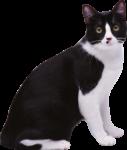 Скачать PNG картинку на прозрачном фоне Черно-белый кот, сидит, вид сбоку