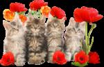 Скачать PNG картинку на прозрачном фоне Четрые пушистых котенка в цветах