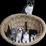 Скачать PNG картинку на прозрачном фоне Четыре котенка в корзине, один сверху