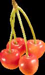Скачать PNG картинку на прозрачном фоне Четыре оранжевые ягоды черешни на одной ветке