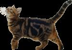 Скачать PNG картинку на прозрачном фоне Довольный кот идет влево и смотрит вверх