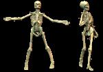 Скачать PNG картинку на прозрачном фоне Два нарисованных скилета рядом