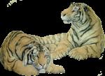 Скачать PNG картинку на прозрачном фоне два тигра, лежат, рисунок