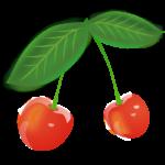 Скачать PNG картинку на прозрачном фоне Две нарисованные ягоды черешни, на одной ветке с листьями