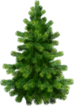 Скачать PNG картинку на прозрачном фоне Елка нарисованная, зеленая, пышная